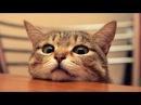 Lustige Katzen Videos zum Totlachen 2017