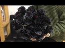 Черные розы в Челябинске от ® DariRoza