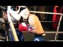 Техника Ближнего Боя для Боксеров ЧАСТЬ 2 Техники Борьбы и Клинча на Ближней Дистанции