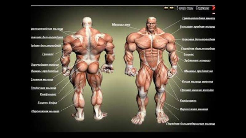 Как можно быстро накачать мышцы. Базовые упражнения. rfr vj;yj ,scnhj yfrfxfnm vsiws. ,fpjdst eghf;ytybz.