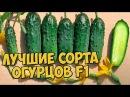 Хитсад ТВ Семена огурцов ТОП7 🌱 ОГУРЕЦ обзор семян F1 которые не оставят вас без урожая