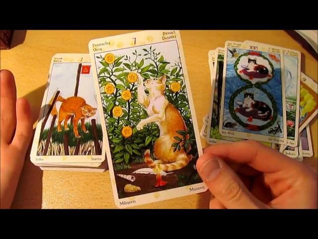 Таро Языческих кошек Обзор колоды и наработки по диагностике магических воздействий