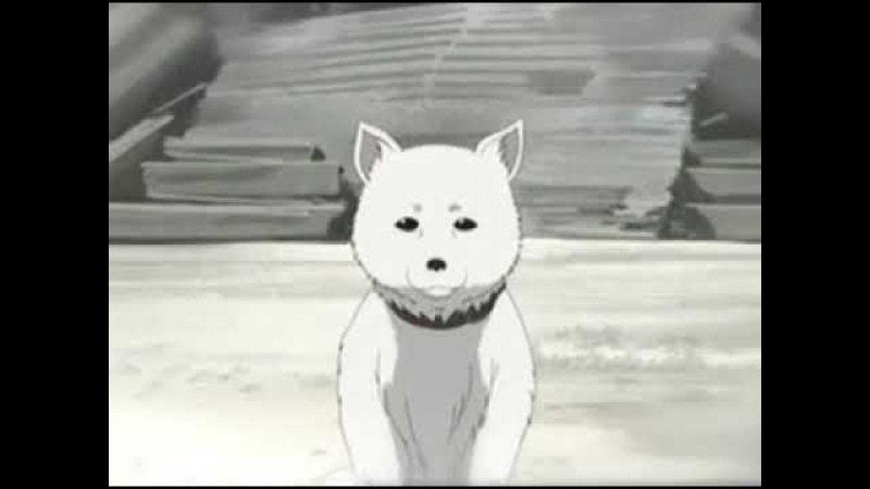 история пса The Most Tearjerking Anime Story EVER (ДО СЛЕЗ)