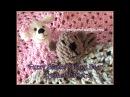 Fuzzy Blanket Lovey Bear Crochet Pattern