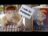 The Hungry Hungry Hamsters (EP 1 - The family of hamsters)