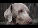 Touching videos Dogs Crying Dead Owner and Friend►100% People Cry