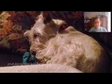 Тест на психику - Haddaway - What Is Love (Animal Cover)