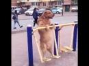 Счастливая собака на качелях