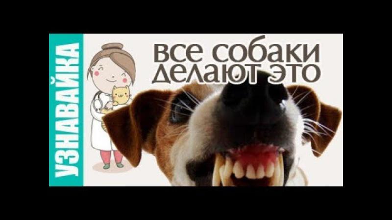 Это делают все собаки! Узнавайка.