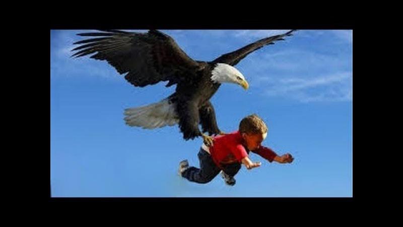 Águia vs (lobo, homem, cobra, outros animais) As Manobras Mais Incríveis de Águias