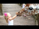 FORGET CATS Funny KIDS vs ZOO ANIMALS are WAY FUNNIER TRY NOT TO LAUGH