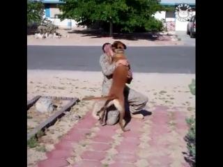 Обнимашки с животными.