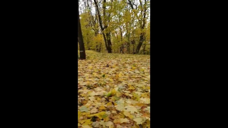 В листьях желтых как то осенью.Усадьба Архангельское 2017