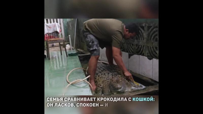 Крокодил-дил-дил живёт!