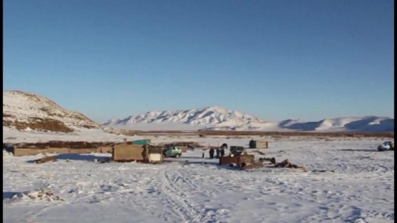 В Туве зимовка скота проходит без осложнений