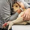 Группа помощи травмированной собаке Лапочке