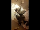 Котята, отдадим в добрые ручки