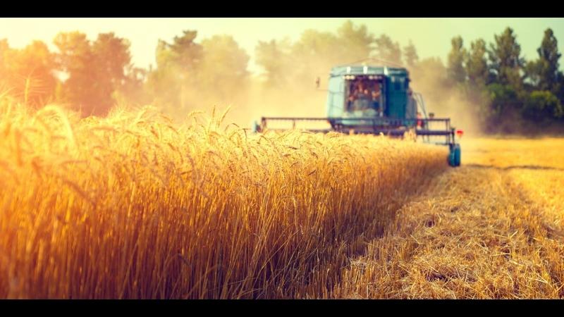 Министр сельского хозяйства о поддержке аграриев