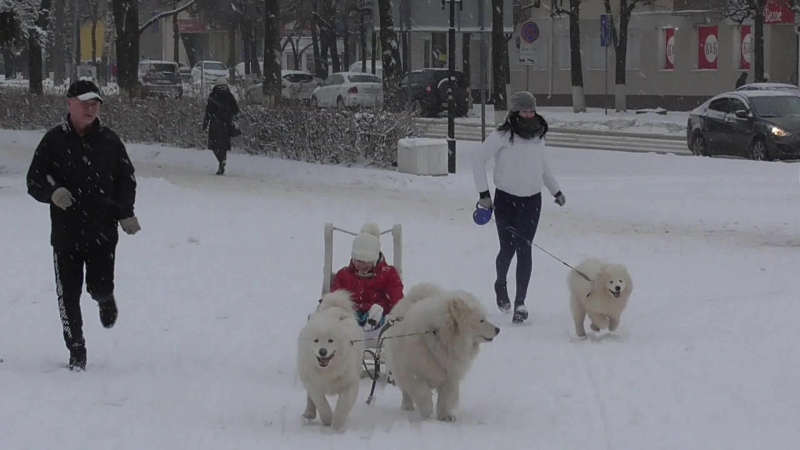Покатушки на белых волках (03.12.17)
