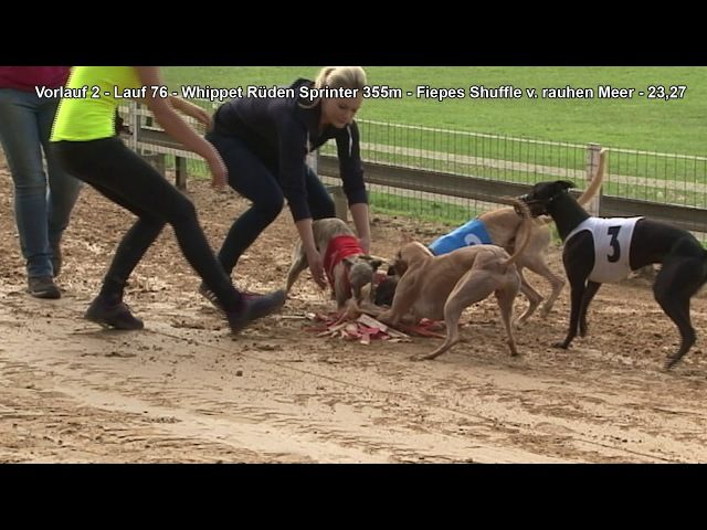 Gelsenkirchen EM Revanche 2017 Whippet Rüden Sprinter 355m