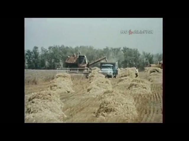 1988 год. Уборка урожая в Волгоградской области.