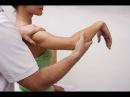 Мышечно фасциальные цепи Фрагмент 2 кинезиология