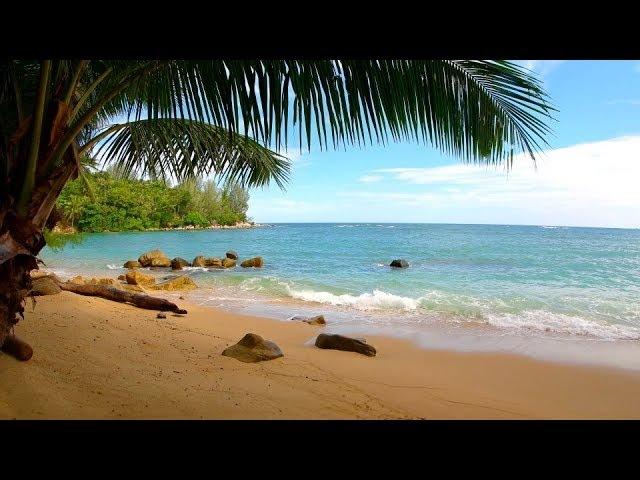 🌴 Tropical Island Beach Sounds For Sleeping Relaxing ~ Ocean Sea Water Breaking Waves Palm Seashore