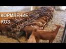Кормление коз на фермах в Испании Рацион коз