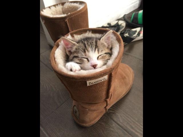 Как необычно кошки спят Смешное видео с кошками Не пропустите