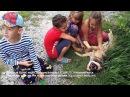 Заласкали бездомную собаку счастливые дети и добрый песик Брюс из приюта