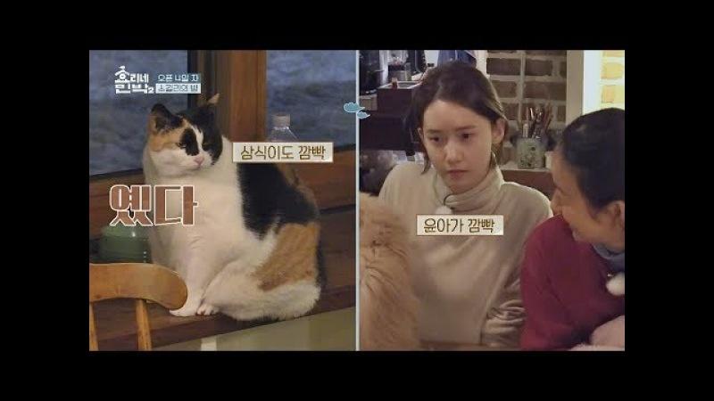 고양이 인사 나누는 윤아46076냥이 삼식 (깜빡♡) 효리네 민박2 6회