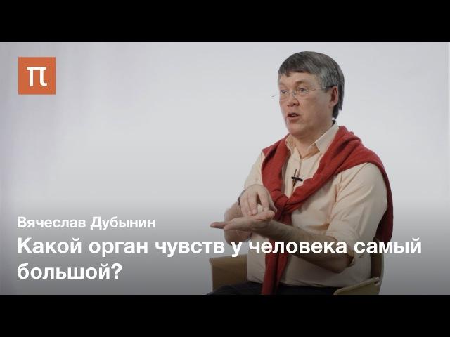 Мозг и кожная чувствительность — Вячеслав Дубынин