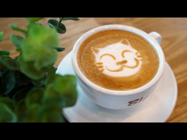 Cat :: Latte Art 귀여운 고양이 라떼아트 - 4K