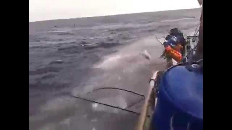 Pescaria das boas
