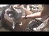 Neuro Drum'n'Bass cat