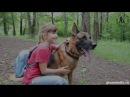 Немецкая овчарка Гилмор спасает девочку от хулигана / German Shepherd Gilmore protect girl