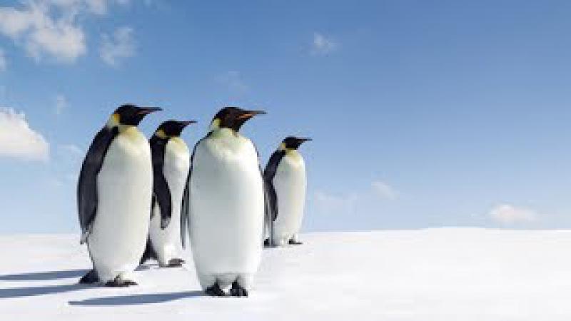 {HD}Amazing Beauty of Antarctic Ice  Animals Documentary 2015-National Geographic 2015