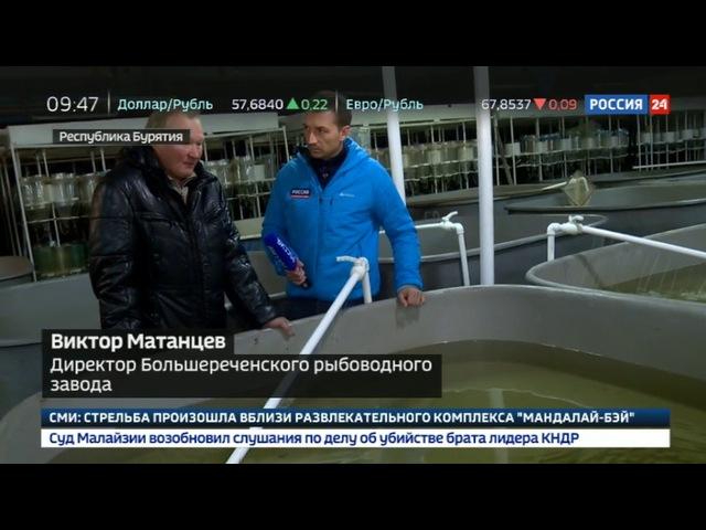 Новости на «Россия 24» • Популяция под угрозой на Байкале ограничили вылов омуля
