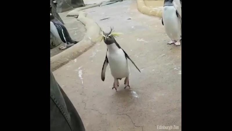 Кипиш!