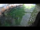 Пингвиний заплыв в Московском зоопарке