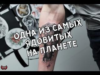 Салон №1 Elite-Tattoo г. Миасс Мастер Александр Карандэйс