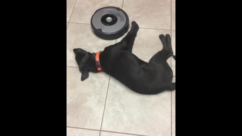 Собака познавшая дзен 720