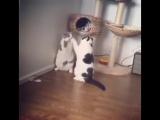 Brutal fight between 2 cats