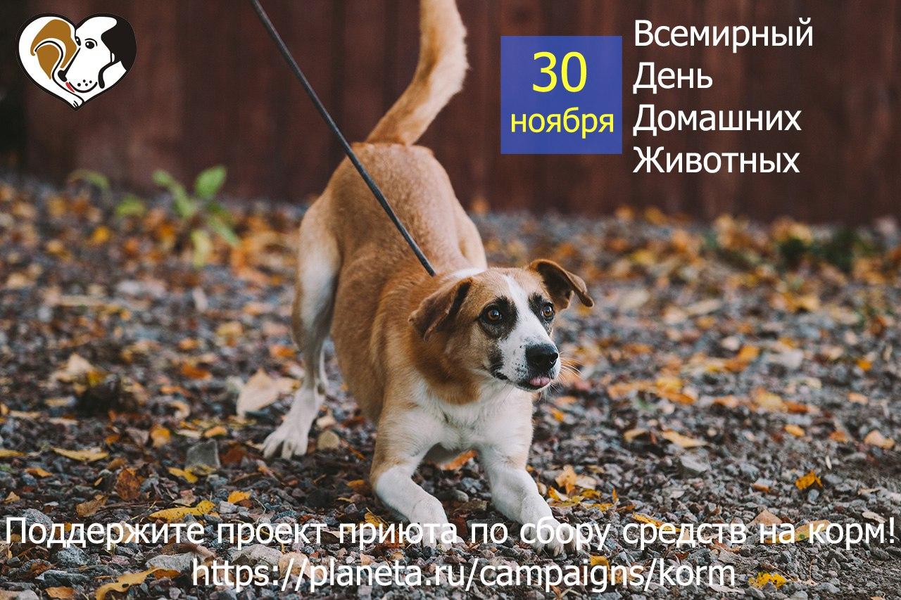 День домашних животных поздравления в прозе