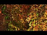 David Rinas - Осень. Грусть....mp4