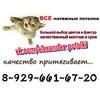 """Натяжные потолки """"ВОСКРЕСЕНСК""""+7(929)661-67-20"""