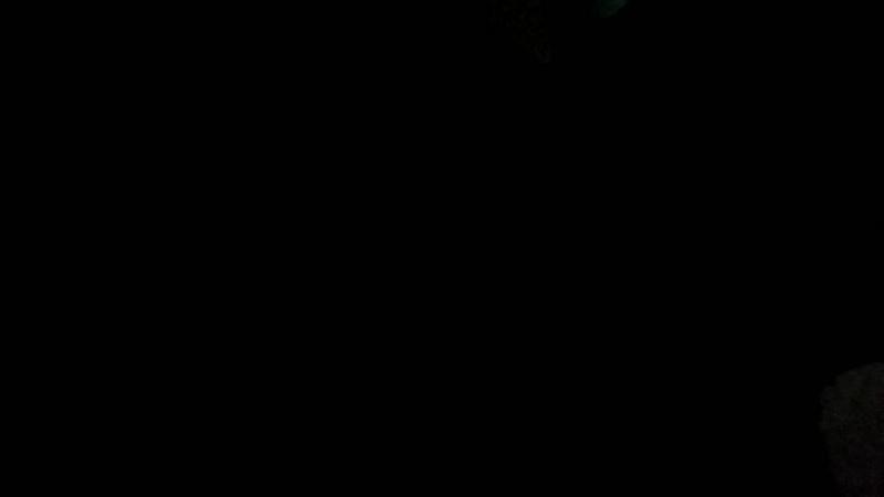 стрельба по живым мишеням в ночь на 20.07.2017