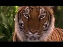 Книга джунглей_ История Маугли - Приключения _ семейный _ США _ 1998