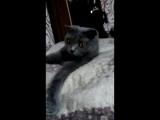 Симоночка как королева на подушках из лебяжьего пуха