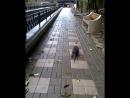 Вот такие прекрасные создания живут в городе Сочи